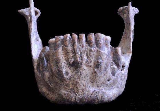 La mandíbula de Dmanisi (Georgia), de hace 1,8 millones de años, denominada D2600, es de una especie diferente de otros fósiles del yacimiento.