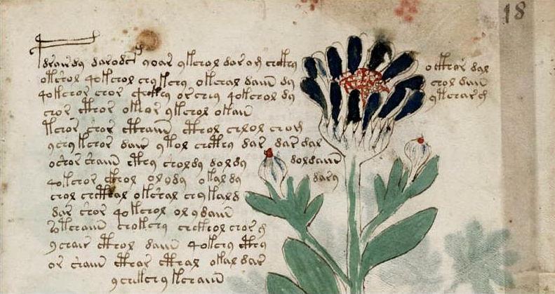 Detalle del Manuscrito Voynich.