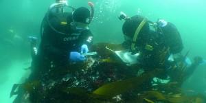 Arqueólogos trabajando en el pecio del barco hundido