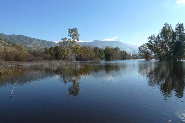 La turbera de El Padul Está constituida por una serie de áreas pantanosas.