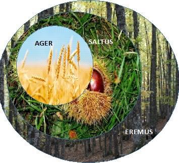 Esquema realizado por Las Hojas del Bosque