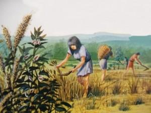 Faenas de la siega en el Neolítico